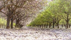 Κήπος με τα ανθίζοντας οπωρωφόρα δέντρα Στοκ φωτογραφία με δικαίωμα ελεύθερης χρήσης