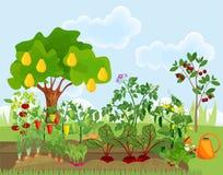 Κήπος με τα διαφορετικά λαχανικά και τα οπωρωφόρα δέντρα διανυσματική απεικόνιση