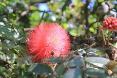 Κήπος με τα κόκκινα λουλούδια στοκ φωτογραφίες με δικαίωμα ελεύθερης χρήσης