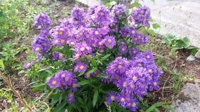Κήπος με τα όμορφα λουλούδια Στοκ φωτογραφία με δικαίωμα ελεύθερης χρήσης