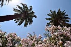 Κήπος με τα oleanders φοινίκων ε Στοκ εικόνες με δικαίωμα ελεύθερης χρήσης