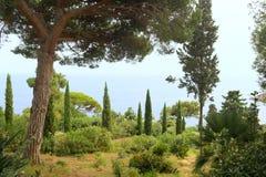 Κήπος με τους κάκτους Στοκ φωτογραφία με δικαίωμα ελεύθερης χρήσης