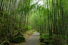 Κήπος μπαμπού σιωπής Στοκ εικόνα με δικαίωμα ελεύθερης χρήσης