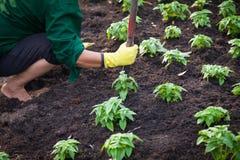 Κήπος νεαρών βλαστών Στοκ εικόνες με δικαίωμα ελεύθερης χρήσης