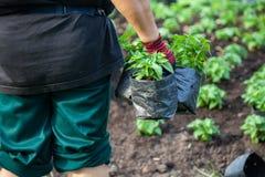 Κήπος νεαρών βλαστών Στοκ φωτογραφία με δικαίωμα ελεύθερης χρήσης