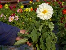 κήπος νταλιών Στοκ εικόνα με δικαίωμα ελεύθερης χρήσης
