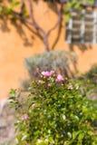 κήπος νότιων γερμανικός εξοχικών σπιτιών Στοκ Εικόνα