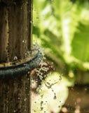 Κήπος 'Οικωών Στοκ Φωτογραφίες