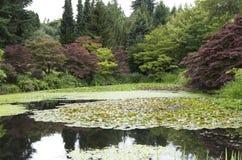 Κήπος ονείρου Στοκ φωτογραφίες με δικαίωμα ελεύθερης χρήσης