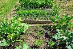 κήπος οργανικός Στοκ φωτογραφία με δικαίωμα ελεύθερης χρήσης