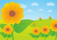 κήπος λουλουδιών ήλιων στους λόφους στοκ εικόνα με δικαίωμα ελεύθερης χρήσης