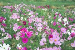 Κήπος λουλουδιών, κήπος λουλουδιών κόσμου Στοκ Εικόνα