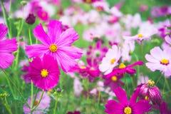 Κήπος λουλουδιών, κήπος λουλουδιών κόσμου Στοκ εικόνες με δικαίωμα ελεύθερης χρήσης