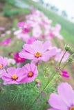 Κήπος λουλουδιών, κήπος λουλουδιών κόσμου Στοκ Φωτογραφία