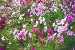 Κήπος λουλουδιών, κήπος λουλουδιών κόσμου Στοκ φωτογραφία με δικαίωμα ελεύθερης χρήσης
