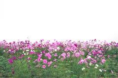Κήπος λουλουδιών, κήπος λουλουδιών κόσμου Στοκ Φωτογραφίες