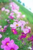 Κήπος λουλουδιών, κήπος λουλουδιών κόσμου Στοκ Εικόνες