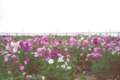 Κήπος λουλουδιών, κήπος λουλουδιών κόσμου Στοκ φωτογραφίες με δικαίωμα ελεύθερης χρήσης
