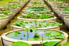 Κήπος λουλουδιών κρίνων νερού Στοκ εικόνα με δικαίωμα ελεύθερης χρήσης