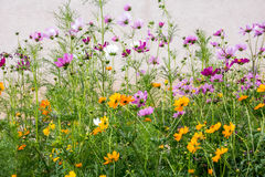Κήπος λουλουδιών κρητιδογραφιών ερήμων του Αλμπικέρκη Στοκ φωτογραφία με δικαίωμα ελεύθερης χρήσης