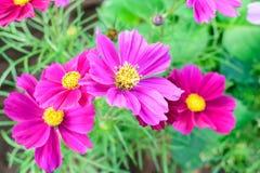 Κήπος λουλουδιών κόσμου Στοκ εικόνες με δικαίωμα ελεύθερης χρήσης