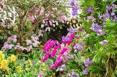 Κήπος λουλουδιών ορχιδεών Phalaenopsis Στοκ φωτογραφία με δικαίωμα ελεύθερης χρήσης