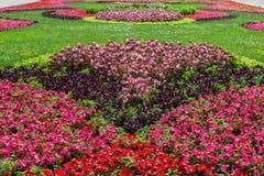 κήπος λουλουδιών που &epsil Στοκ εικόνα με δικαίωμα ελεύθερης χρήσης