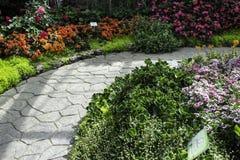 Κήπος λουλουδιών στα ξημερώματα όταν μια όμορφη θέση Στοκ Εικόνα