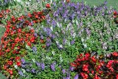 Κήπος λουλουδιών στην κοιλάδα Στοκ εικόνες με δικαίωμα ελεύθερης χρήσης