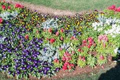 Κήπος λουλουδιών στην κοιλάδα Στοκ Εικόνες