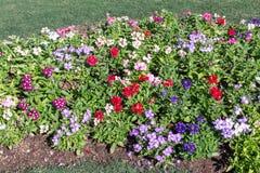 Κήπος λουλουδιών στην κοιλάδα Στοκ Φωτογραφίες