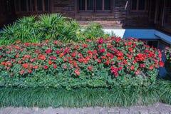Κήπος λουλουδιών στην κοιλάδα Στοκ Εικόνα