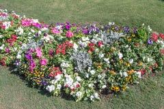Κήπος λουλουδιών στην κοιλάδα Στοκ εικόνα με δικαίωμα ελεύθερης χρήσης