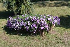 Κήπος λουλουδιών στην κοιλάδα Στοκ Φωτογραφία