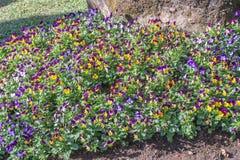Κήπος λουλουδιών στην κοιλάδα Στοκ φωτογραφίες με δικαίωμα ελεύθερης χρήσης