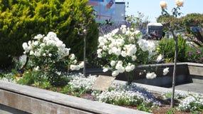 Κήπος λουλουδιών στο Σαν Φρανσίσκο Στοκ φωτογραφία με δικαίωμα ελεύθερης χρήσης