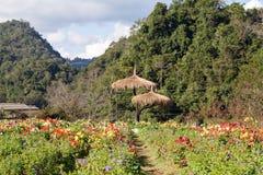 Κήπος λουλουδιών στο ANG Khang, Chiang Mai, Ταϊλάνδη Doi Στοκ εικόνες με δικαίωμα ελεύθερης χρήσης