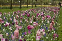 Κήπος λουλουδιών την άνοιξη Στοκ Εικόνες