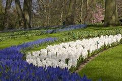 Κήπος λουλουδιών την άνοιξη Στοκ εικόνες με δικαίωμα ελεύθερης χρήσης