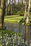 Κήπος λουλουδιών την άνοιξη Στοκ Φωτογραφία