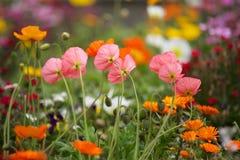 Κήπος λουλουδιών. στοκ εικόνες με δικαίωμα ελεύθερης χρήσης