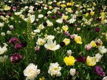 Κήπος λουλουδιών Coloful Στοκ Εικόνες
