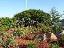Κήπος λουλουδιών, Townline Plaza, Malden, Μασαχουσέτη, ΗΠΑ Στοκ Εικόνες