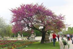 κήπος Παρίσι Στοκ Εικόνα