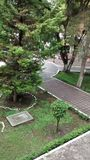 Κήπος πεύκων Στοκ εικόνα με δικαίωμα ελεύθερης χρήσης