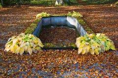 κήπος πηγών Στοκ Εικόνες