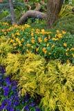 κήπος που βάζουν σε στρώ&sigma Στοκ Εικόνα
