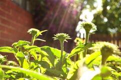 Κήπος πρωινού Στοκ Φωτογραφίες