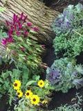 Κήπος πτώσης Στοκ φωτογραφίες με δικαίωμα ελεύθερης χρήσης