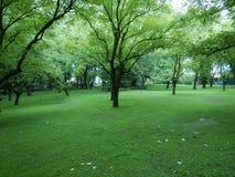 Κήπος πλησίον gulmarg-ι δέντρων ξύλων καρυδιάς Στοκ εικόνα με δικαίωμα ελεύθερης χρήσης